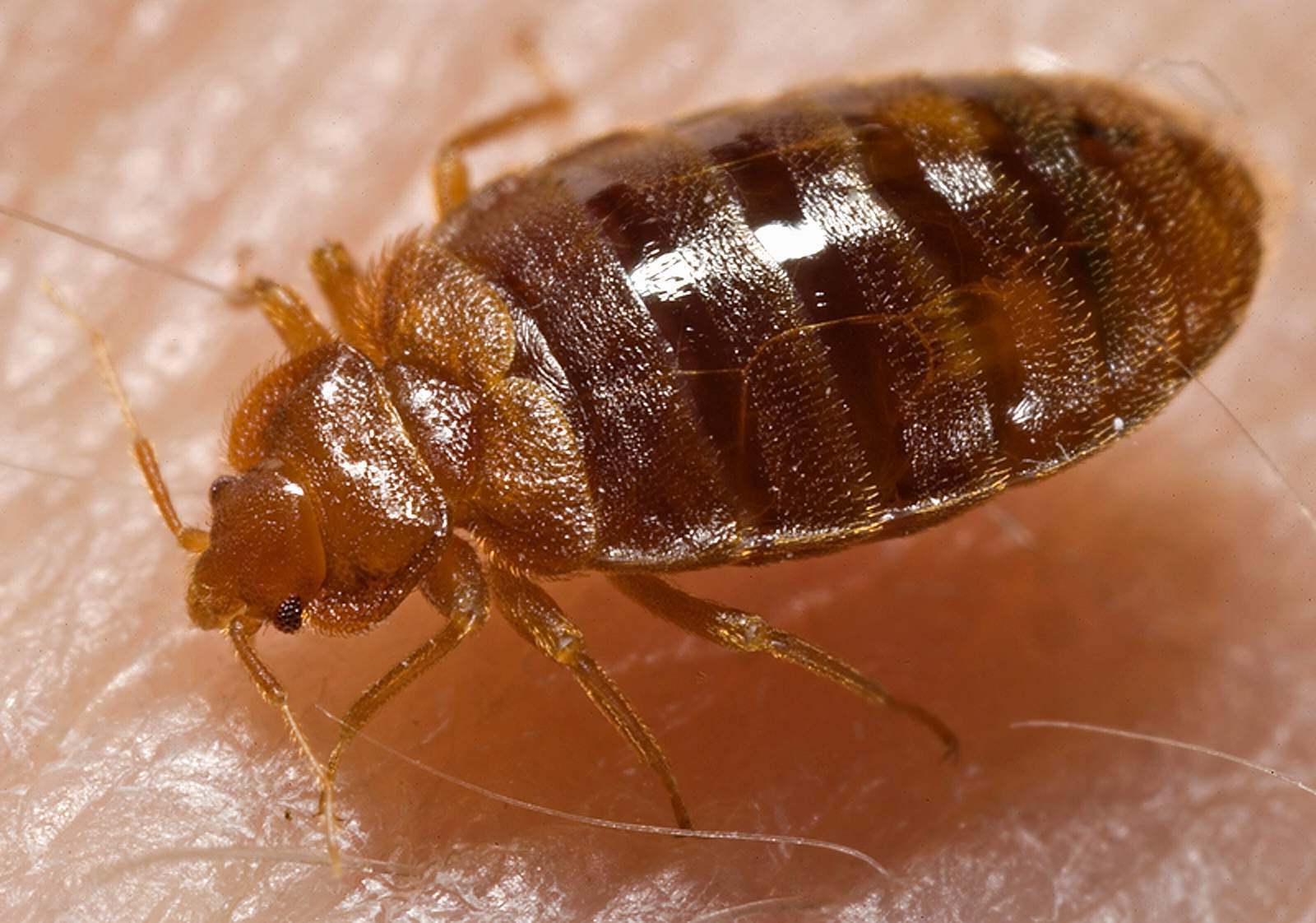 Treating bed mites