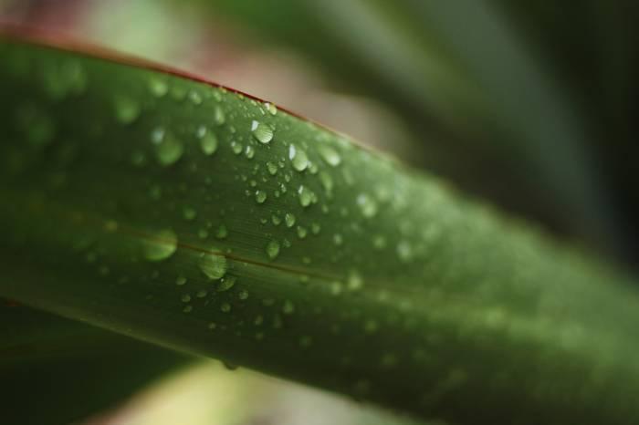organic flax fibre