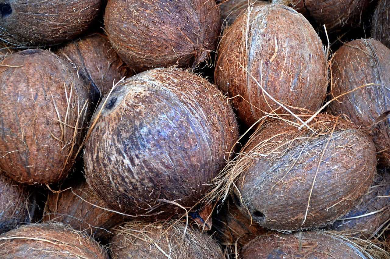Coconuts piled up